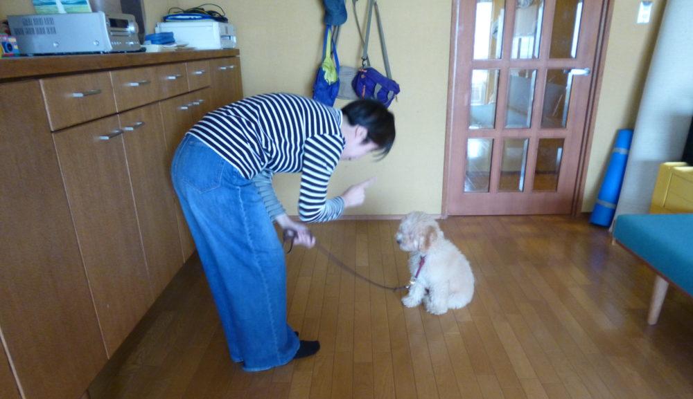 小型犬のしつけは肩こり・腰痛にご注意