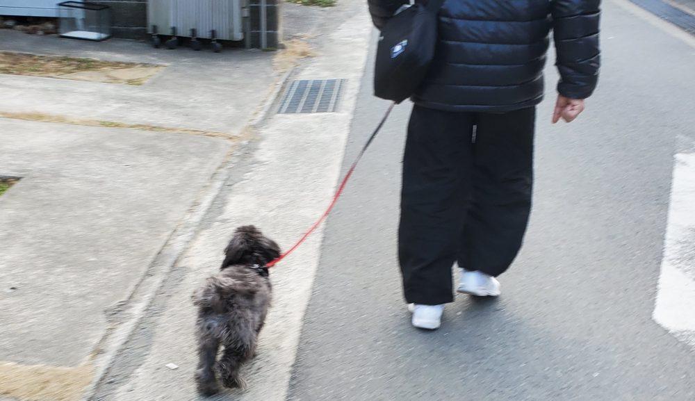 飼い主さんもお散歩を楽しもう~愛犬と一緒に色んな道を探検してみよう~