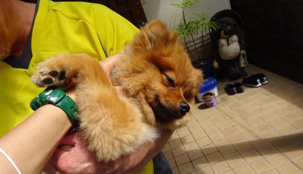 『飼い主依存症』と思ったら、実は『愛犬依存症』だった?